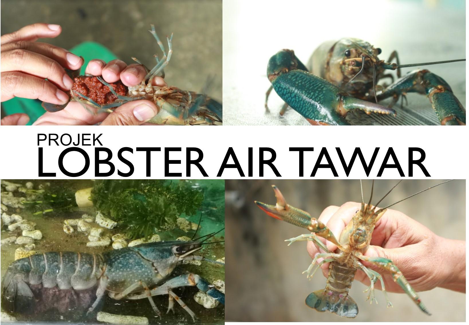2021 Kursus Penternakan Lobster Air Tawar Lat M Niaga